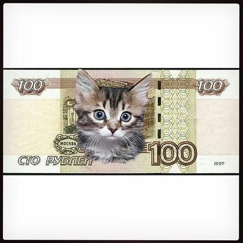 """@Regrann from @4paws_homeless_kaluga - калуга и все-все-все!!! друзья ! Чтобы помочь приюту Территория кошек, мы проводим день_СТОЛЬНИКА ! Приюту остро необходима Ваша помощь ! В этот день мы призываем всех желающих поделиться Всего ОДНОЙ СОТНЕЙ рублей - суммой для многих незначительной, но способной оказать существенную поддержку кошкам приюта, которых на данный момент более 100!!! Поддержите, пожалуйста, акцию!!! Что такое 100 рублей? Для кого-то - пачка сигарет, для кого-то - чашка кофе, для кого-то - глянцевый журнал. Да мало ли какую вещь можно купить на 100 рублей из категории """"мелочь, а приятно""""... Что такое 100 руб для приюта? 100 рублей - это 200 грамм корма и 3 сытые морды))) 100 рублей - это 50 шприцов... 100 рублей - это наполнитель для кошачих лотков... 100 РУБЛЕЙ ДЛЯ ПРИЮТСКИХ КОШЕК - ЭТО НЕ МЕЛОЧЬ!!! А порой единственный шанс выжить! Реквизиты для помощи: СБ: 639 00 222 9001 383841 (Алена Викторовна Ч) ЯК: 410012526332619 ГН: 89038131152 (билайн) Куратор приюта: @pushistyyhvost Финансовый отчет: https://vk.com/topic-34485387_30681010 Тема приюта: vk.com/topic-34485387_29300898 Каталог животных: https://vk.com/topic-34485387_29548886 Статистика пристройства: https://vk.com/topic-34485387_31214154 приют_территория_кошек приют помоги_коту кошки кот котята соточка помоги друг Regrann"""
