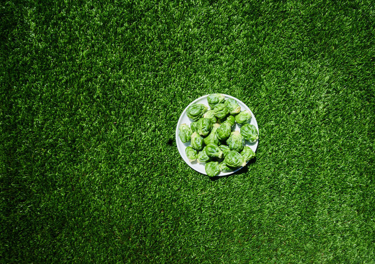 High angle view of brussels sprouts in plate on field
