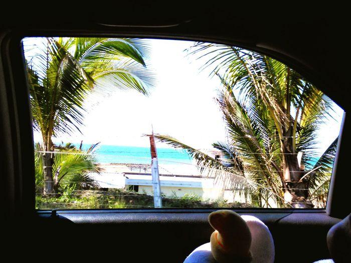 Vacation Nature Is Freedom First Eyeem Photo United States Ecuador Beachview Tropical Paradise