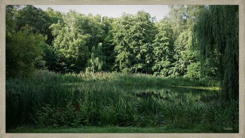 In dem ganzen Grün verbirgt sich übrigens ein Teich. 😉 ▶ Berlin Kienhorstpark Schwanenteich Natur Wasser Bäume Grün Sommer 2015 Galaxy Note 3 Yadea