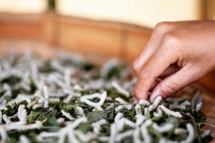 Close-up of hand and silkworms