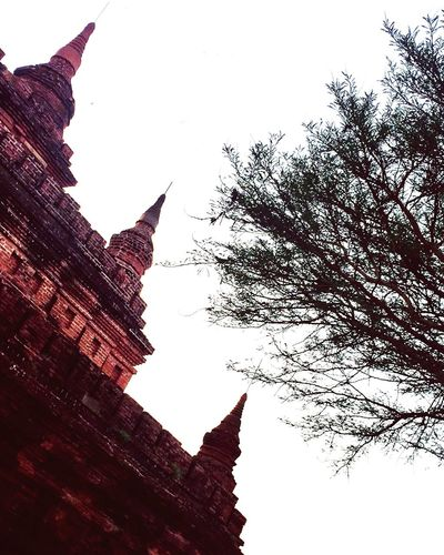 Trees and Temples Trees Temples Ancient Civilization Architecture Bagan Myanmar Buddha Place Of Worship Indochina ASIA Travel Destinations Outdoors Photography Vacations Travel