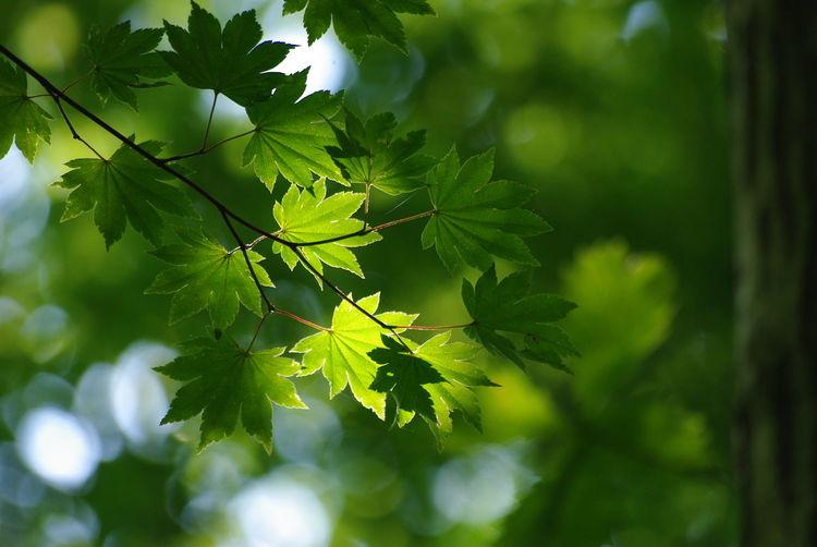 今日は久しぶりに Pentax の K200d が出動‼︎ 画質や色あいに老いを感じるけど、ミラーの動く感触…音…やっぱり良いなぁ‼︎ Nature Leaf Green 葉っぱ 暑くてもガマン だが撮りたい