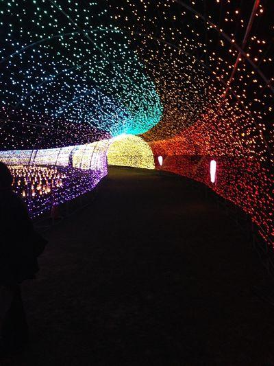 ライトアップ Light Night ナイト Light Up 沖縄 Okinawa 日本 Japan Cute 可愛い カラフル Colorful