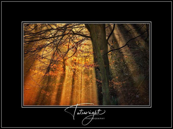 Sunbeams Tree