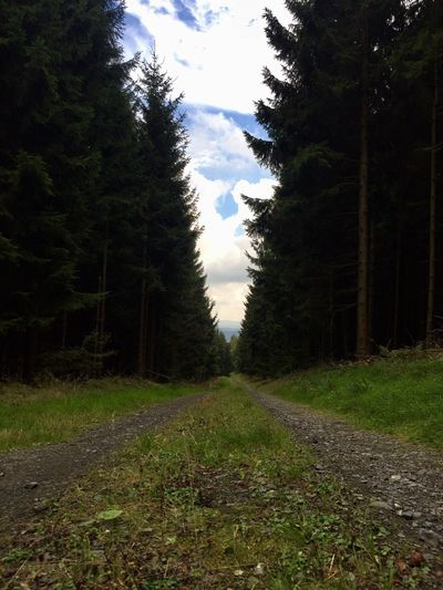 Coniferous Forest Coniferous Tree Rothaargebirge Forest Road