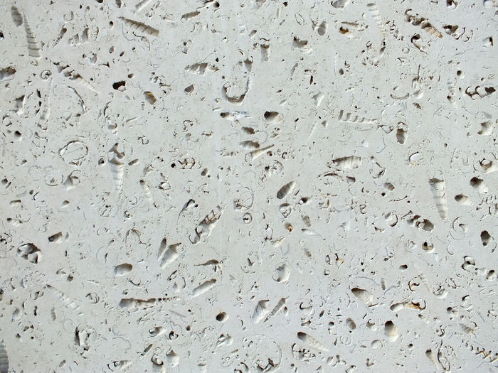 fossil shells in limestone blocks Block Building Exterior Fossil Limestone Fossil Rock Fossils Fossils And Rocks Paving Stone She Slabs