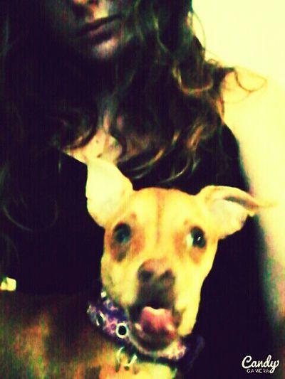 The Widget Lil Bit Chihuahua Jack Russell Mixedmutt Acid Warp Funny Face Cute Pup Lovemypet Disturbing wtf?