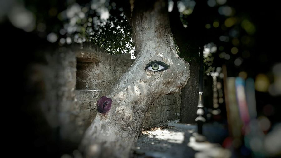 the tree gives you a feeling as if its really watching you. loved it. Open Edit Tree Art Eyeinthetree Greeneye Taking Photos Hanging Out EyeEm Nature Lover Imwatchingyou