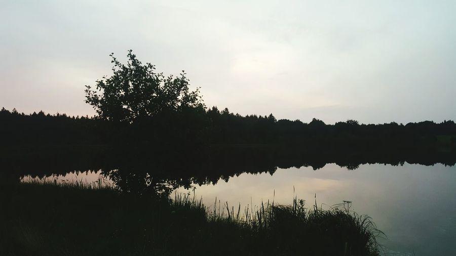 Landscape Water Arrival Reflection Sunset Lake Backgrounds Tree Reflection Lake Wetland Medingenai EyeEmNewHere