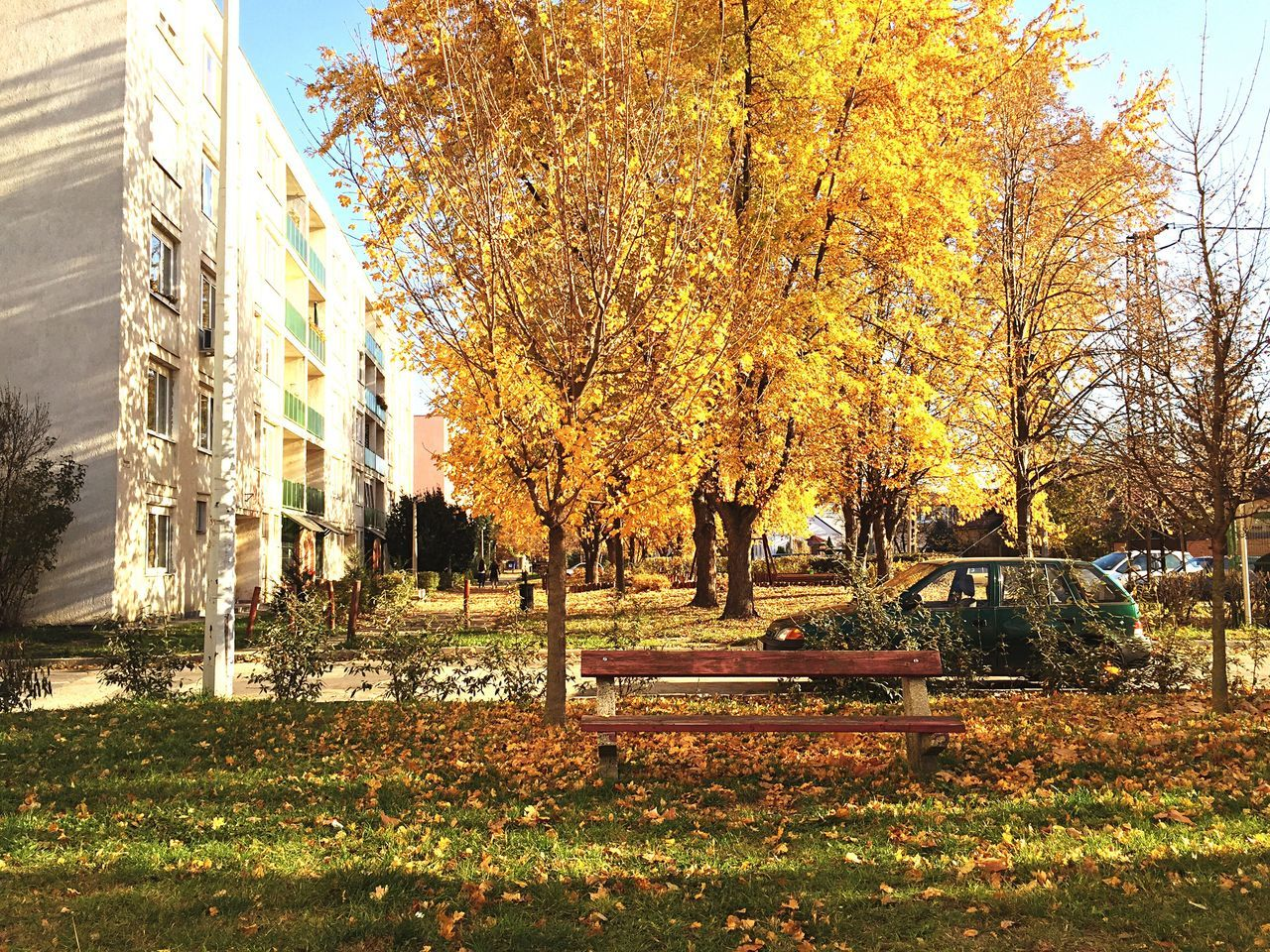 autumn, building exterior, tree, built structure, architecture, change, outdoors, day, leaf, no people, nature, sky, beauty in nature