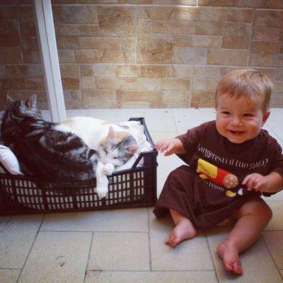 Alice guarda i gatti ma non li mangia. #chiaralascura Chiaralascura
