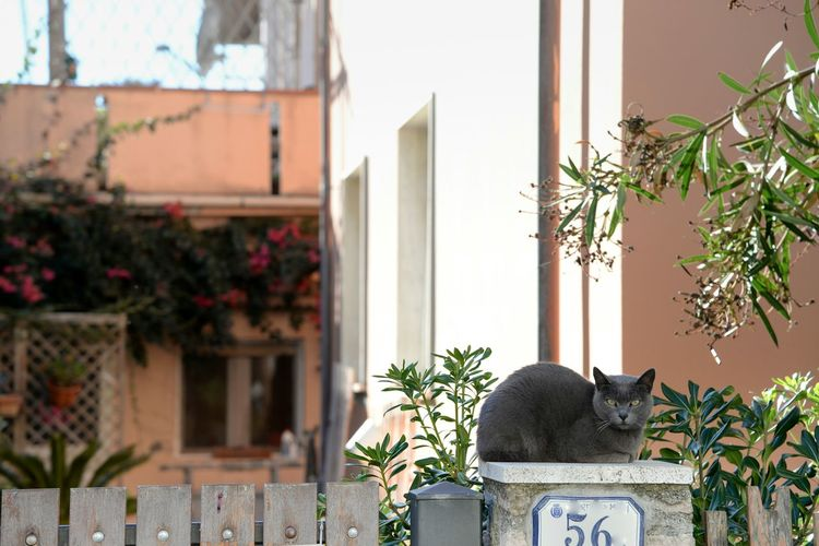 Close-up Cats Cats Of EyeEm Cat Eyes Plant Relaxing Time Sunlight Home Nature_collection Eyes Catslife Gatto Certosino Streetphotography Selective Focus Street Street Photography light and reflection Time To Relax Gray Cat