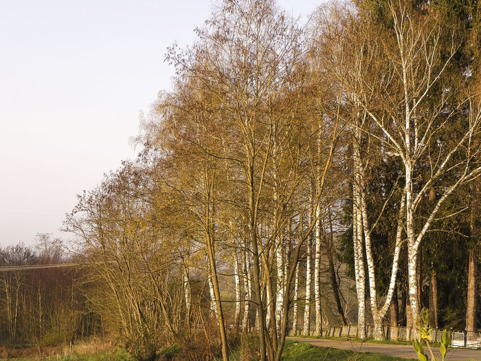 Low angle view of trees on field against sky