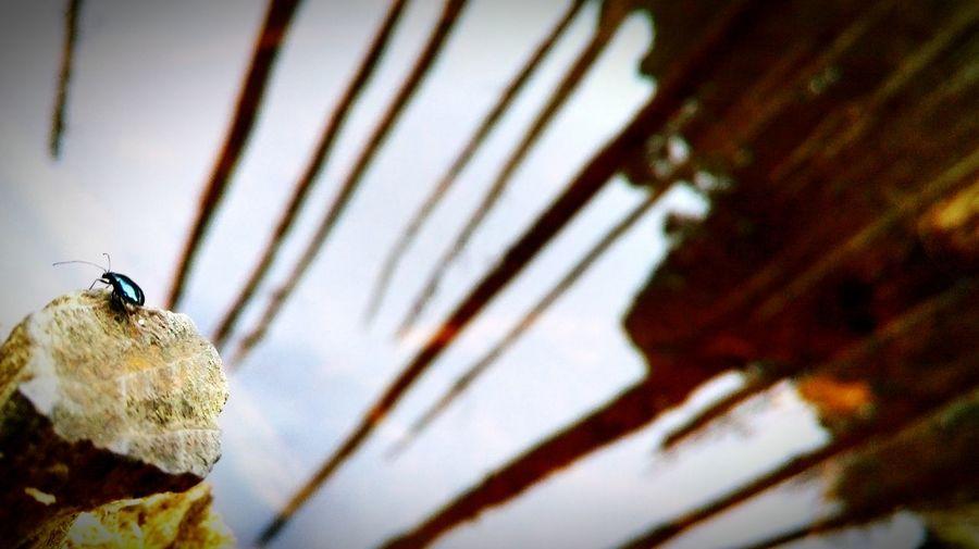 螢火蟲 倒影 湖 忘憂森林 枯枝