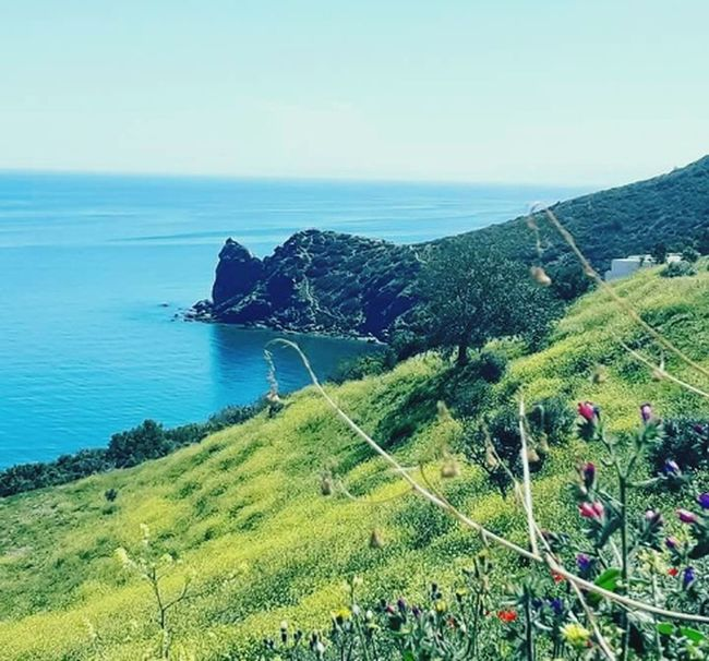 Simply the beauty of the sea Sea Water Tree Agriculture Beach Terraced Field Sky Landscape Grass Green Color