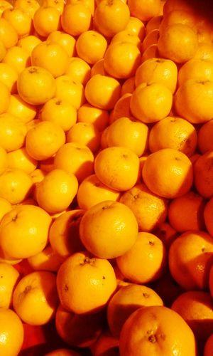 Oranges winter