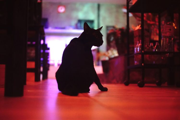 Cat looking away while sitting on floor at home