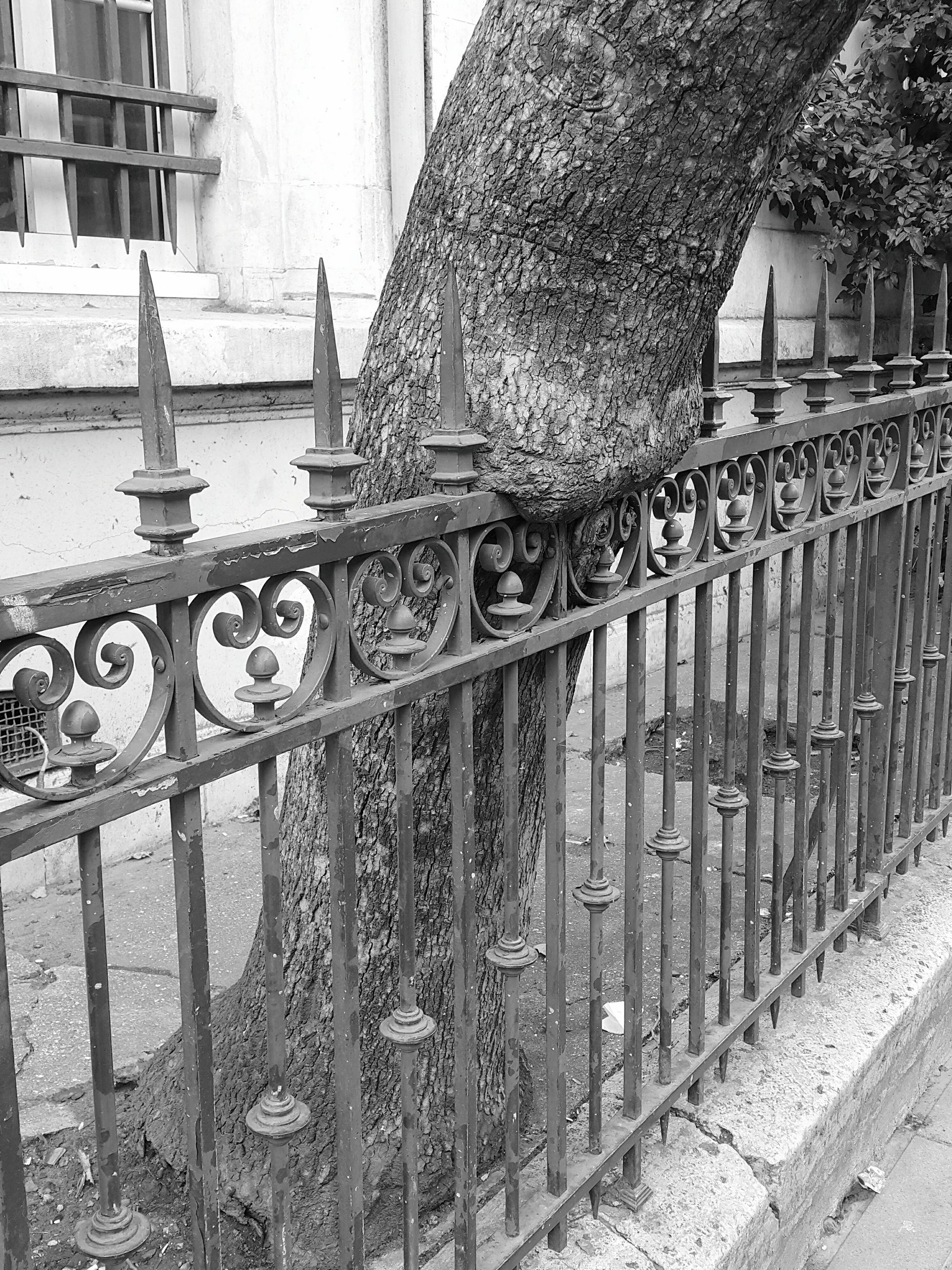 railing, architecture, built structure, no people, building exterior, day, metal, barrier, boundary, security, safety, protection, outdoors, fence, communication, building, nature, wrought iron, staircase, close-up