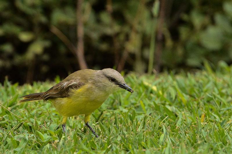 Bird capture in