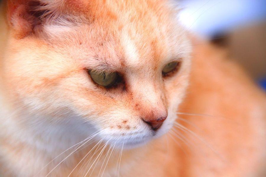 Orton Effect EyeEm Nature Lover Cat Cats