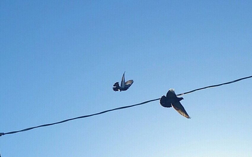 Check This Out Early Bird Birds In Flight Birds_collection Peaceful View In My Backyard