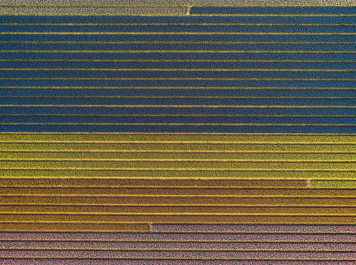 Aerial view of agricultural landscape
