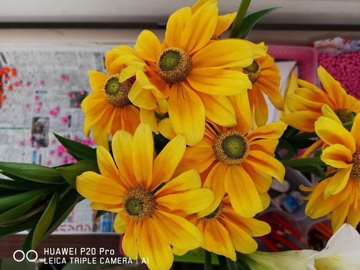 Huaweip20pro Flower Chrysanthemum