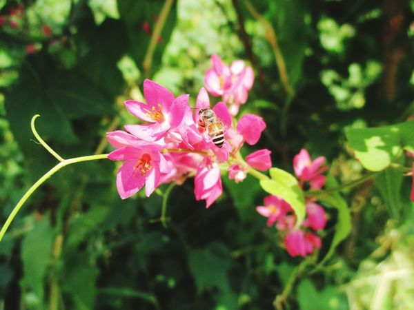 insect on the pink floewer Pink Color Flower Plant Leaf Nature Outdoors Day No People Close-up Beauty In Nature Growth Flower Head Water Freshness