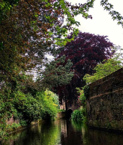 Tree Water Nature River Forest Day Tranquility Tranquil Scene Outdoors Beauty In Nature Scenics Green Color Growth No People Plant Sky Eye4photography  Picoftheday The Week Of Eyeem EyeEmBestPics Eyeemphotography Canterbury London Oziref EyeEm Best Shots - Nature