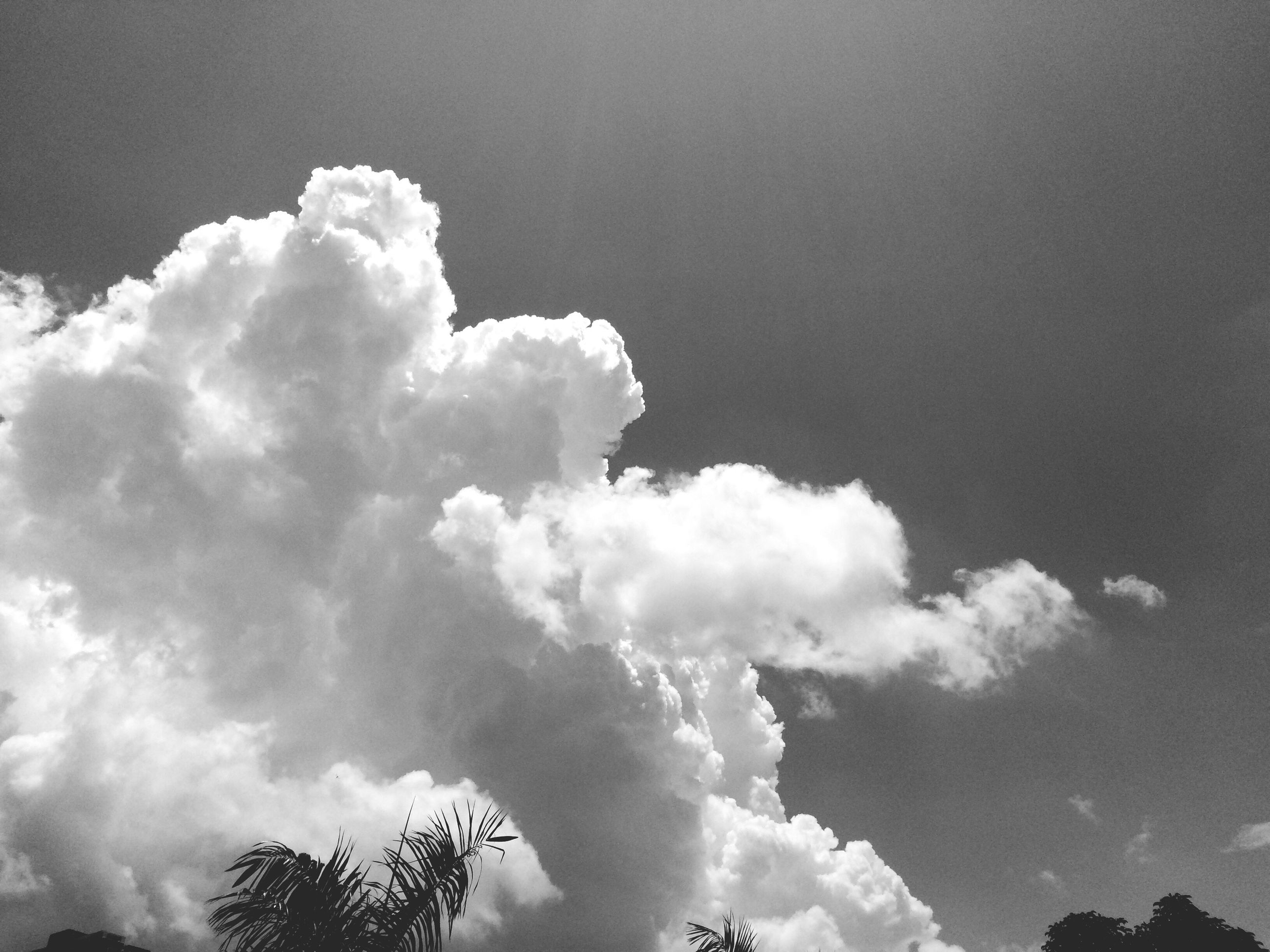 low angle view, sky, cloud - sky, beauty in nature, nature, tranquility, scenics, tranquil scene, tree, cloudy, cloud, white color, day, outdoors, no people, high section, idyllic, growth, blue, weather