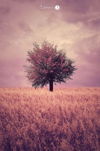 Landscape Sky Nature Single Tree Art Creative Inspiation Field