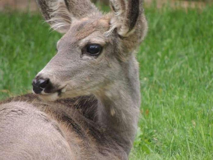 Deer EyeEm Nature Lover Urban Nature October 3, 2015