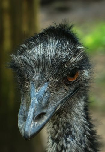Bird Animal Head  Bird Photography Birds Of EyeEm  Close-up Animal Themes Mean Looking Beak Feathers Eye4photography  EyeEm Best Shots