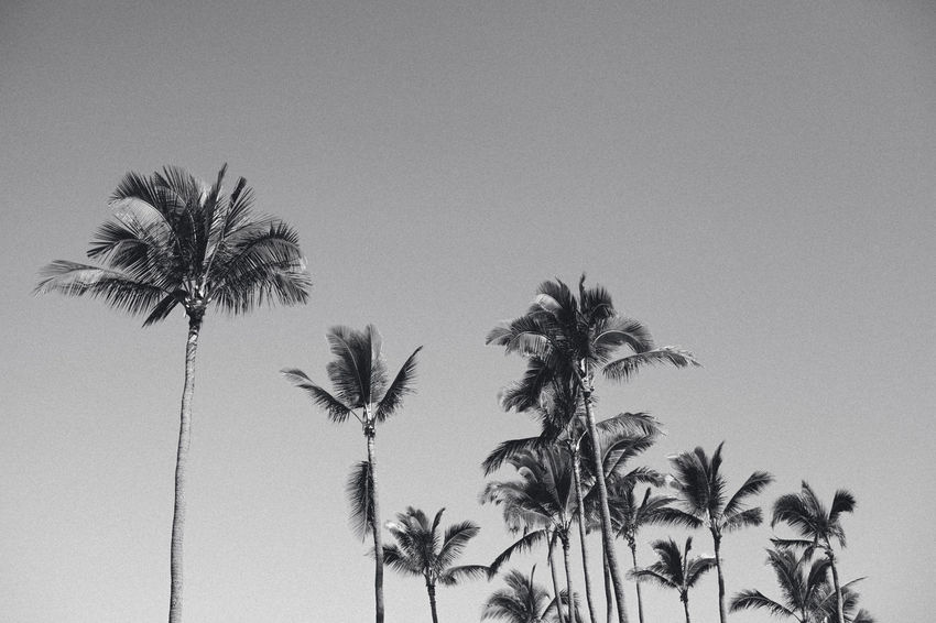 Beauty In Nature Blackwhite Clear Sky Close-up Day Growth Low Angle View Nature No People Outdoors Palm Tree Sky Tree Tree Trunk