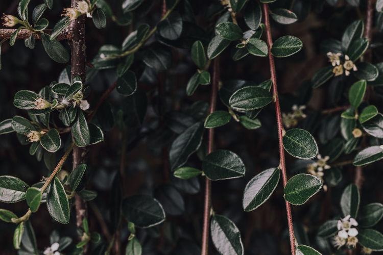Green plant, close-up.