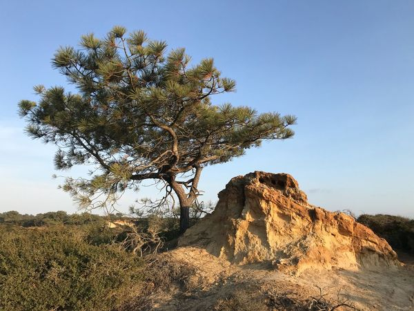 EyeEm Selects Nature Landscape Beauty In Nature Tree Rock - Object Tranquility Tranquil Scene Clear Sky Scenics Day Outdoors No People Low Angle View Sunlight Mountain Blue Sky IPhoneography IPhone7Plus