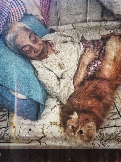 Aji May Be The 35th Cat In Opah's Life