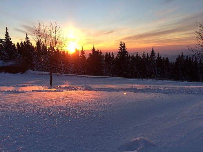 Snow covered field by trees against sky during sunset
