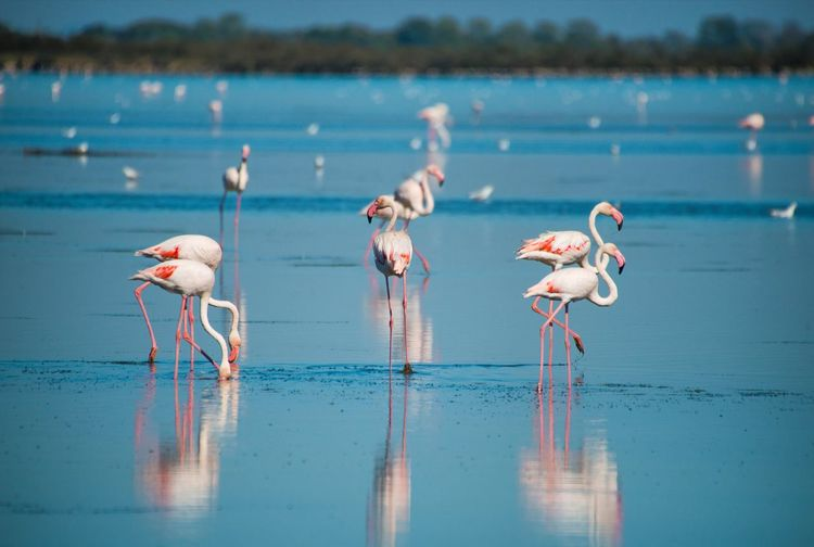 Flamingos Flamingo Bird Animals In The Wild Animal Wildlife Wading Colony Reflection Water Nature Side View Lake Full Length Day No People Outdoors Pink Color Portrait Beauty In Nature Animal Themes