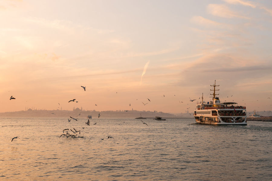 Ferry & the Old City During Sunset Cityscape Ferry Istanbul Orange Public Transportation Seagulls Beauty In Nature Boat Bosphorus Cloud - Sky Flying Horizon Over Water Istanbul Turkey Kadıköy Nature No People Old City Outdoors Scenics Sea Sunset Tranquility Travel Destinations Water Waterfront
