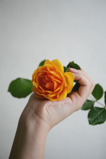 Hands Natural