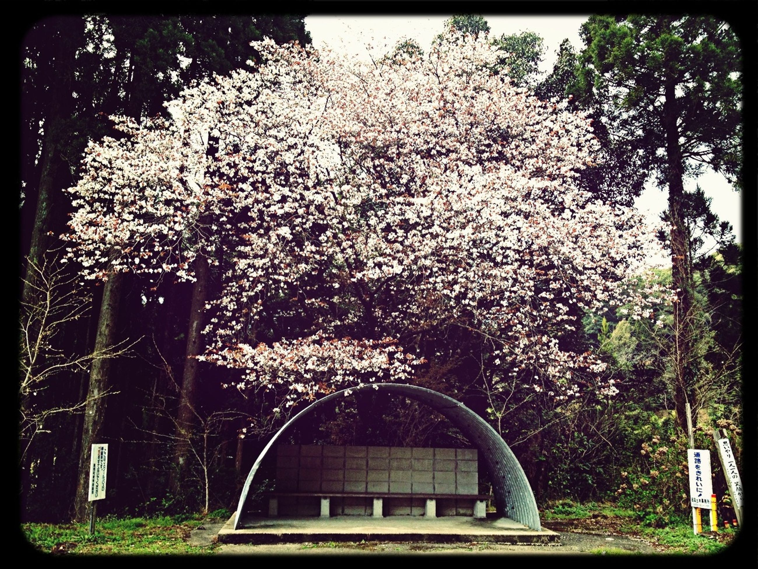 transfer print, tree, auto post production filter, building exterior, growth, flower, built structure, architecture, branch, low angle view, nature, plant, outdoors, day, no people, park - man made space, sky, house, blossom, garden