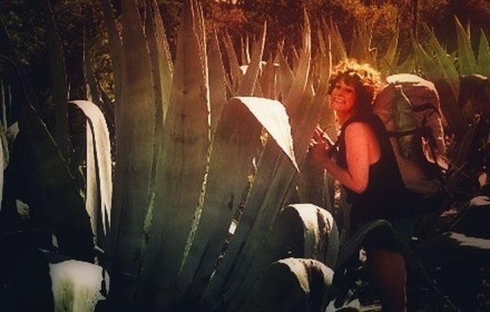Huge Agave In Croatia Plants Traveling
