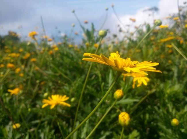 Flora del Avila Flor Cielo Naturaleza Paisaje