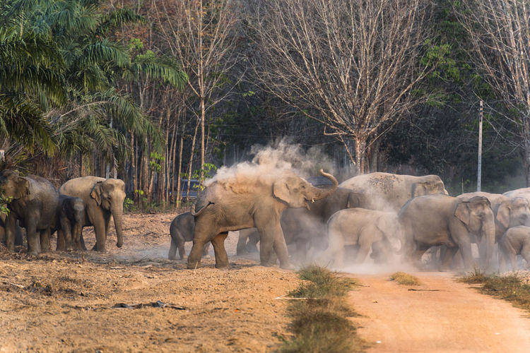 Elephant family Animal Themes Mammal Animal Animals In The Wild Animal Wildlife Group Of Animals Tree Elephant Plant Vertebrate Nature Dust No People African Elephant Domestic Animals Land Day Landscape Young Animal Animal Family Herd Outdoors Herbivorous