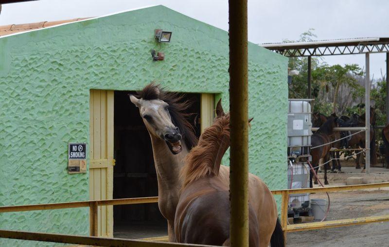 Mammal Animal Themes Animal Domestic Animals Domestic Livestock Pets Horse Building Exterior Nature
