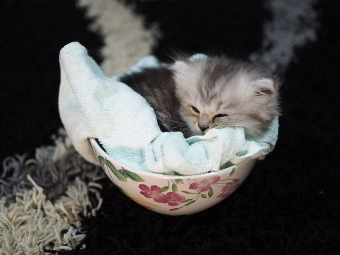 Close-up of kitten in bowl
