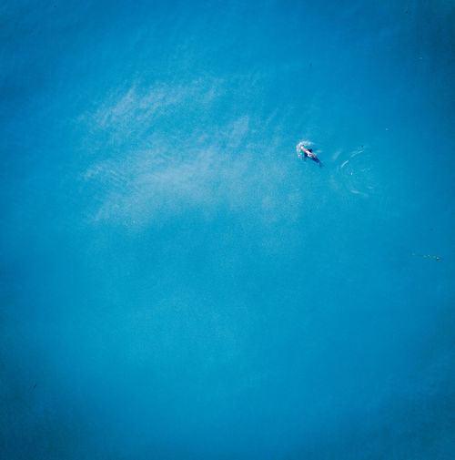 solo seal Drone  Beauty In Nature Blue Day Full Length High Angle View Nature Outdoors People Sea Seal Sealion  Swimming UnderSea Underwater Water Young Adult