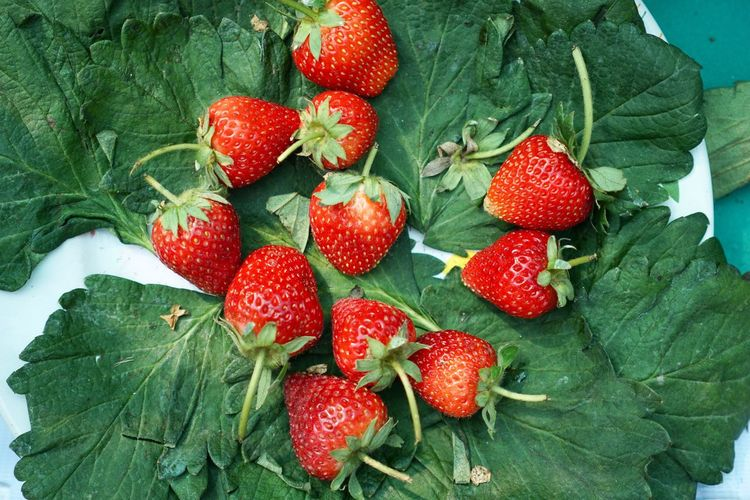 Fresh strawberry. Healthy Food Vitamin C Strawberry Red Fruit Healthy Eating Leaf Green Color Food Freshness Berry Fruit Close-up Serving Size Sweety  Freshness Red Ready-to-eat
